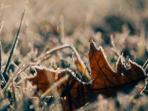 A photo of a leaf with frost on it by Aaron Burden on Unsplash