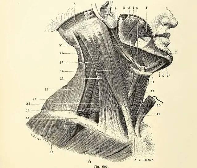 Osteopathy-Neck