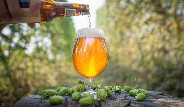 pouring a glass of beer with hops all around it