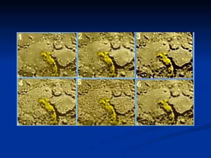 Есть ли жизнь на Венере? Российские ученые нашли на Венере «грибы», «скорпиона» и «ящерицу» 5