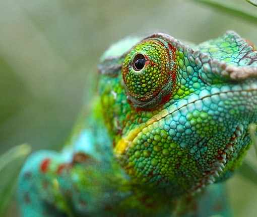 Создан материал, меняющий цвет подобно хамелеону, работающий на наномашинах 3