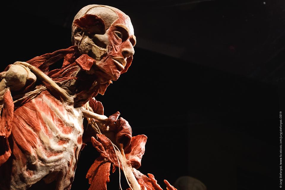 Выставка пластинированных человеческих тел в Киеве 3