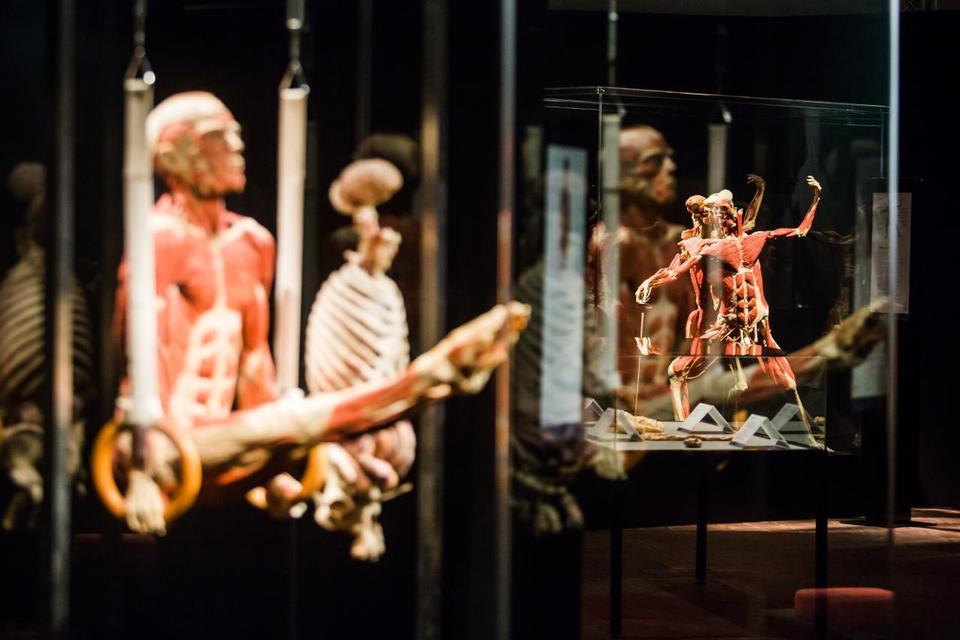 Выставка пластинированных человеческих тел в Киеве 11