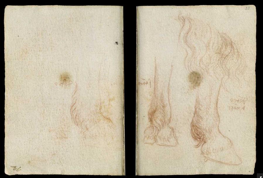 Научные книги Леонардо да Винчи выложили в открытый доступ 37