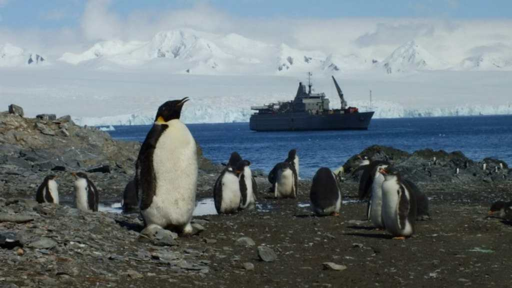 25-сезонная экспедиция. Вдоль Антарктического полуострова 12