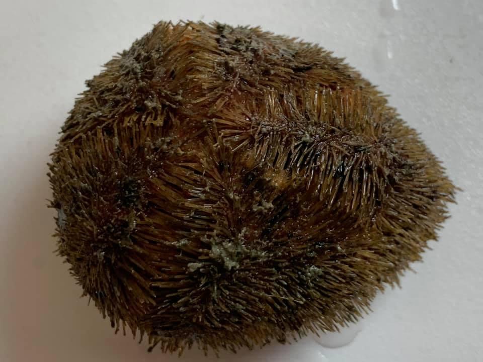 Украинские исследователи нашли в Антарктиде уникальных морских животных 3