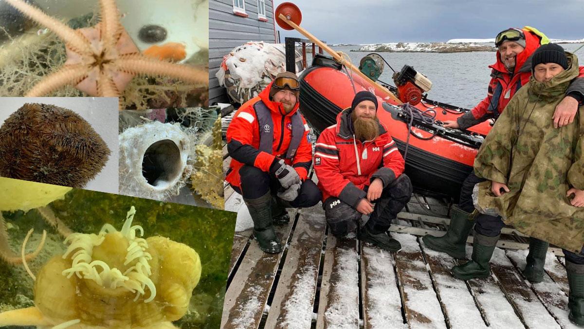 Украинские исследователи нашли в Антарктиде уникальных морских животных 1