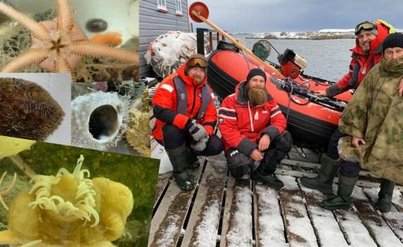 Украинские исследователи нашли в Антарктиде уникальных морских животных 8