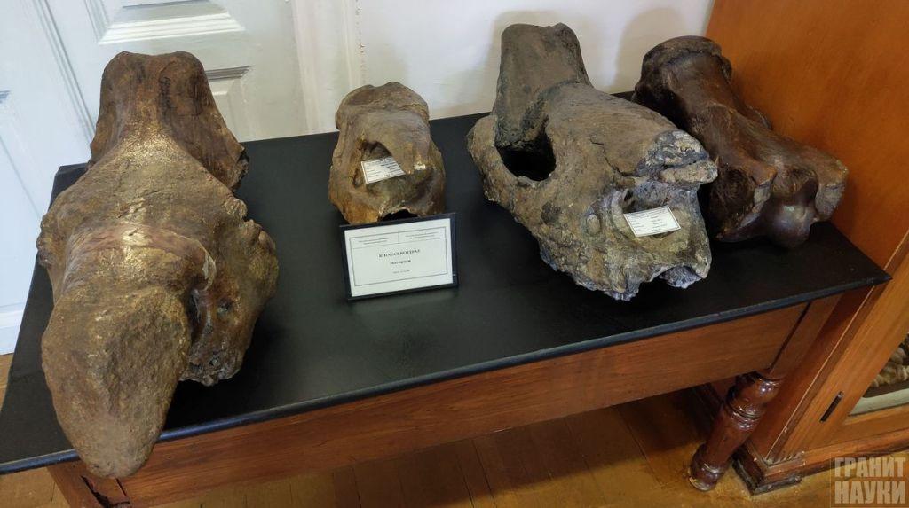 Палеонтологическая гордость Одессы. Фоторепортаж 45