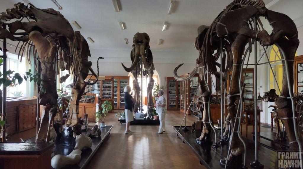 Палеонтологическая гордость Одессы. Фоторепортаж 30