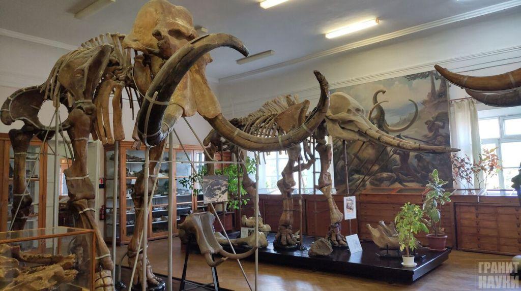 Палеонтологическая гордость Одессы. Фоторепортаж 34
