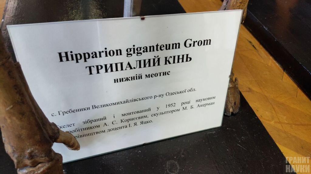 Палеонтологическая гордость Одессы. Фоторепортаж 22