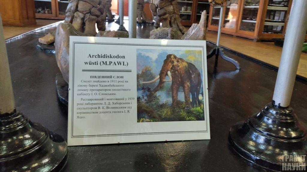 Палеонтологическая гордость Одессы. Фоторепортаж 16