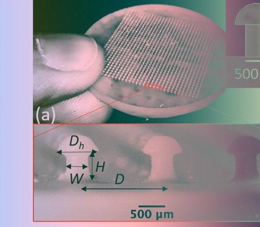 Физиков вдохновила форма грибов на создание новой застежки 6