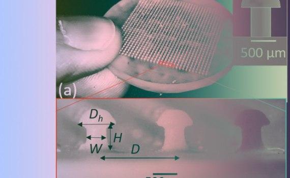 Физиков вдохновила форма грибов на создание новой застежки 5