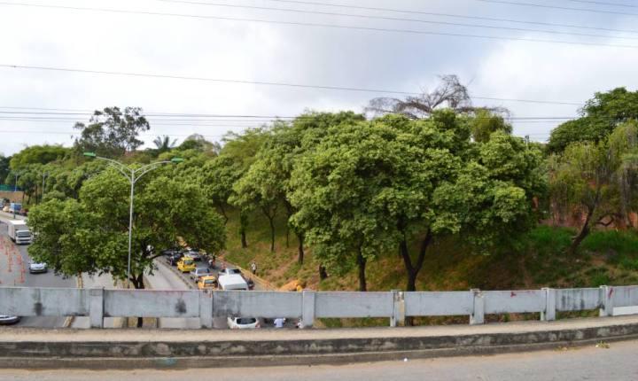 ¿Cómo está la siembra de árboles en Bucaramanga?