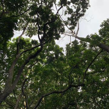 Sigue tala de árboles en Monterredondo