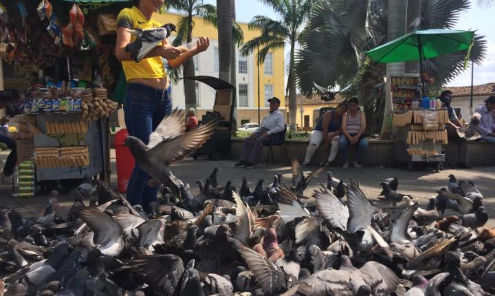 El parque García Rovira y la problemática de las palomas