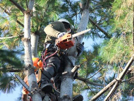 Question Time: Taglio alberi Via Cisanello – Via Maccatella