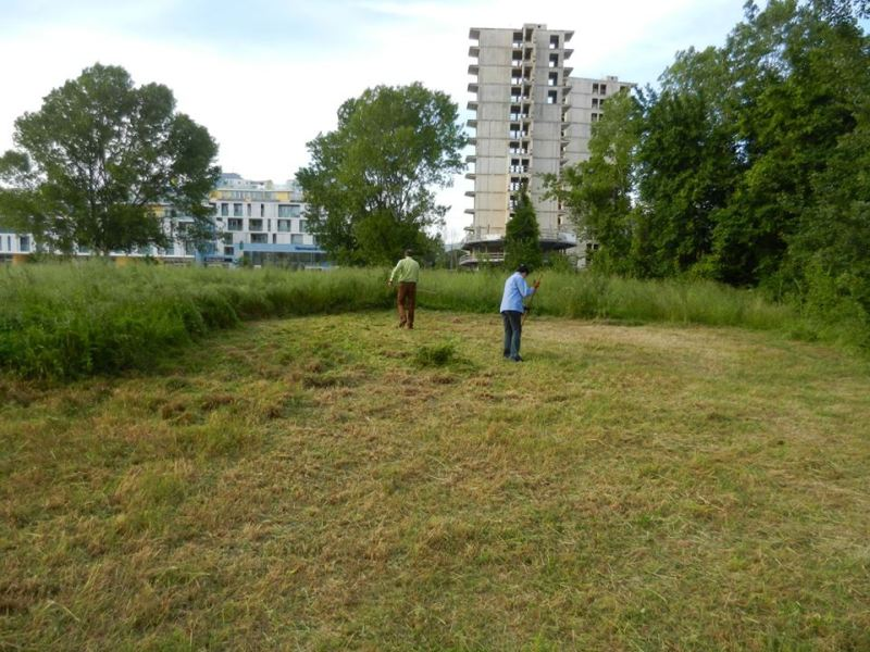 Area verde via Valgimigli-via Luzzato: dopo l'esposto di Una città in Comune la Asl chiede al Comune di imporre la pulizia