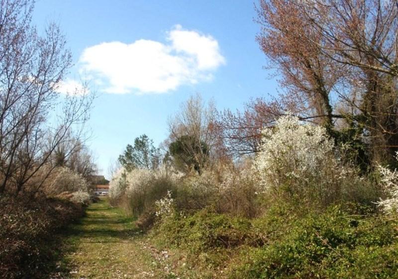 Interpellanza: Realizzazione Parco di Cisanello
