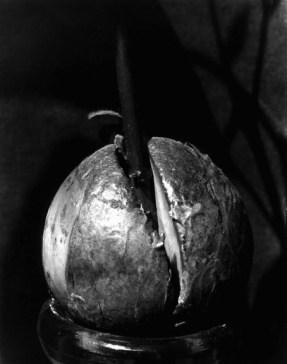 Avocado Pit, 1920s