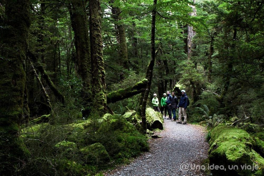 Acampar-Nueva-Zelanda-unaideaunviaje-13