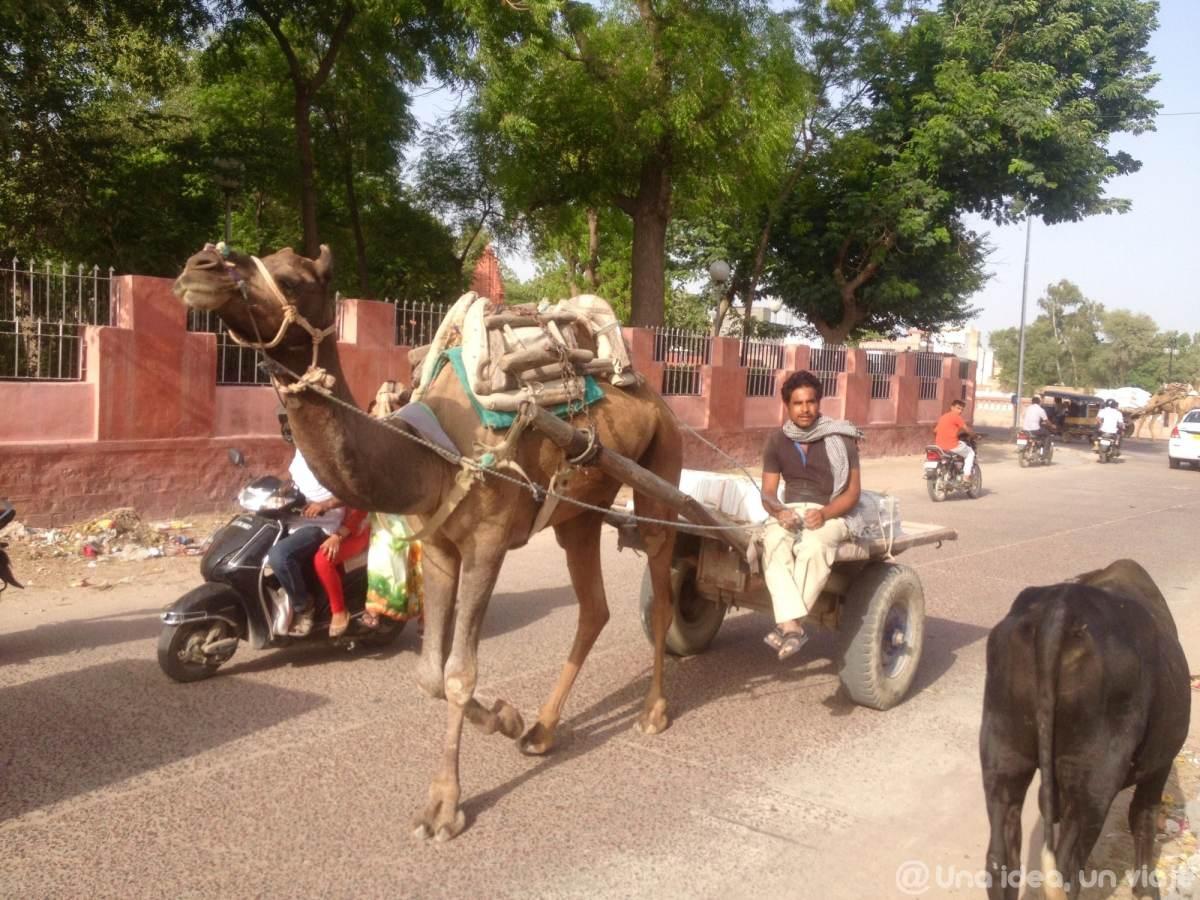 15-dias-rajastan-india-bikaner-unaideaunviaje-05