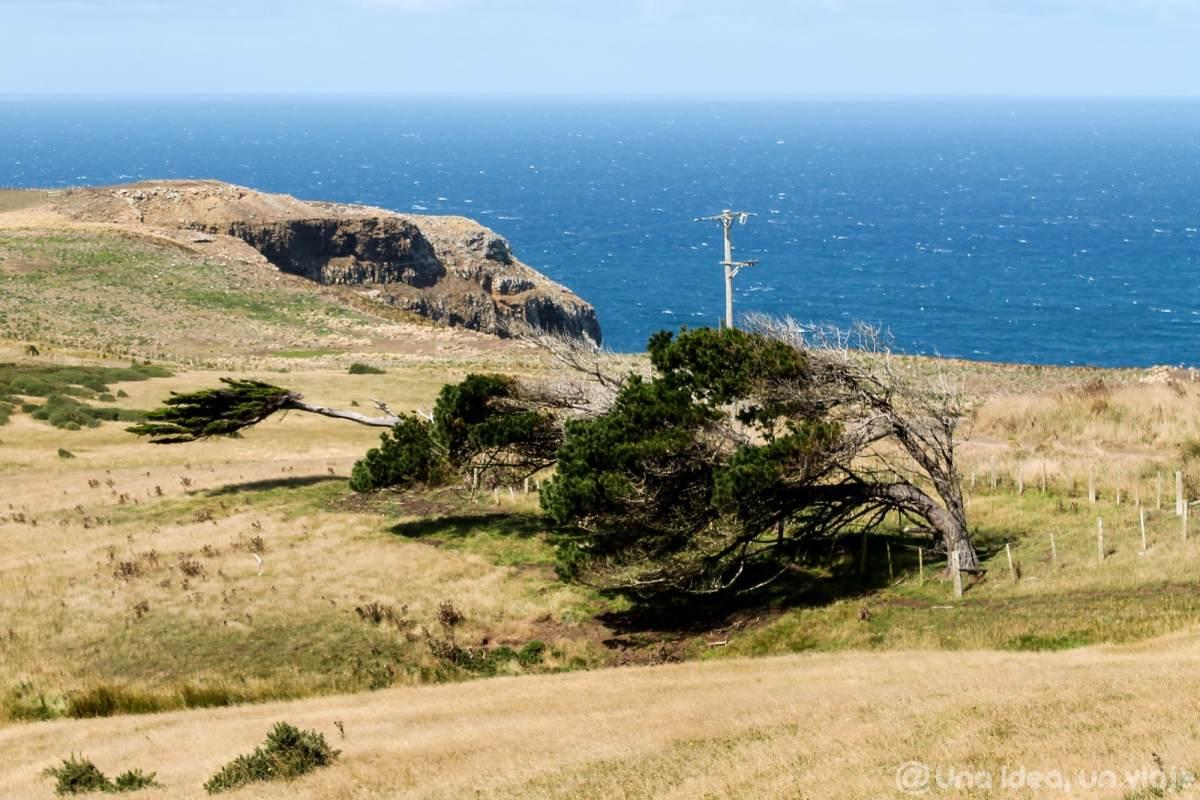 nueva-zelanda-dunedin-peninsula-otago-unaideaunviaje-11