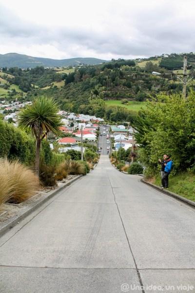 nueva-zelanda-dunedin-peninsula-otago-unaideaunviaje-15