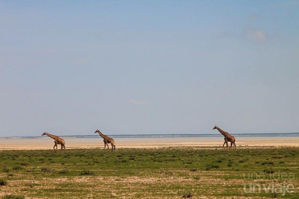 Jirafas Etosha National Park