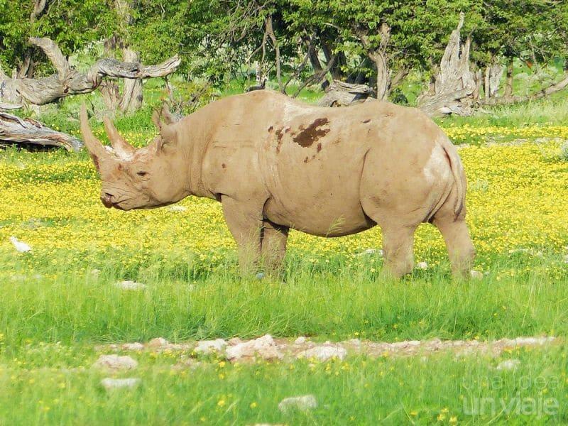 Rinoceronte Etosha National Park