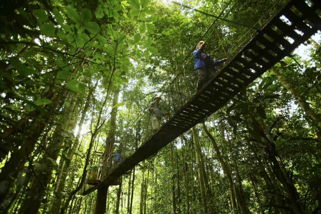 Adentrase en el Amazonas, Iquitos