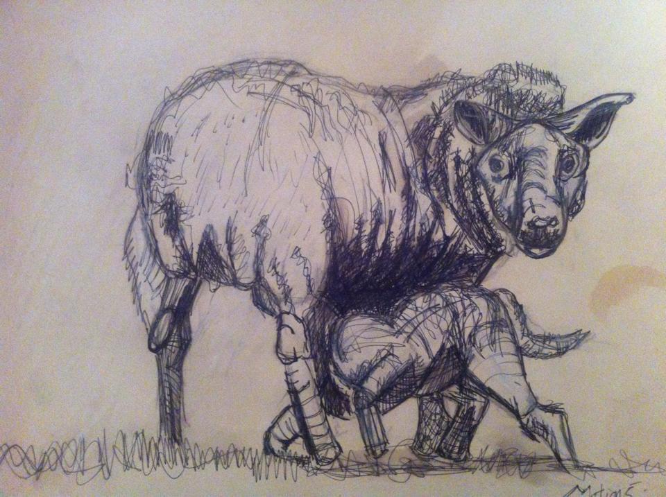 Sheep drawing 3