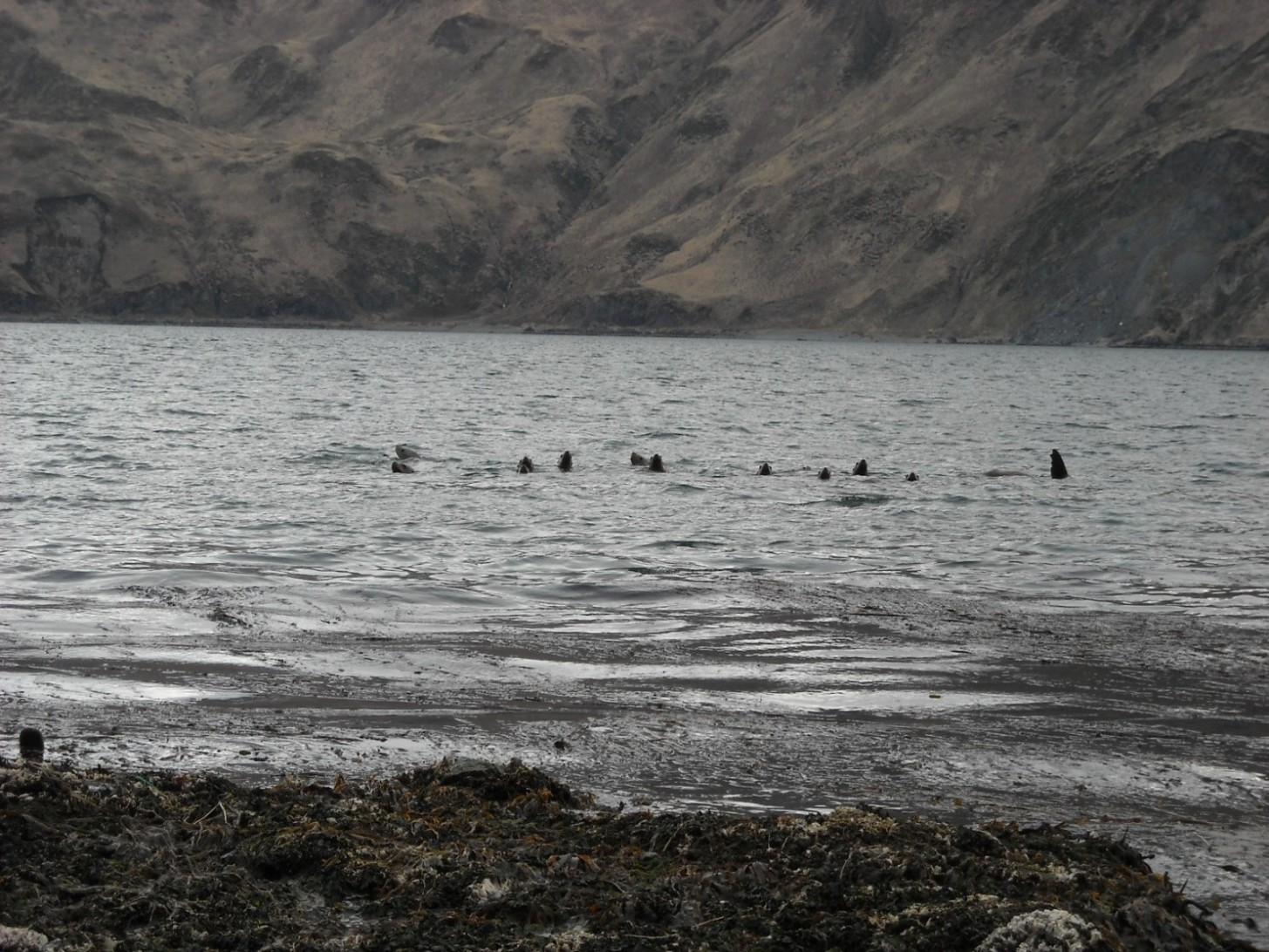 And lots of sea lions!