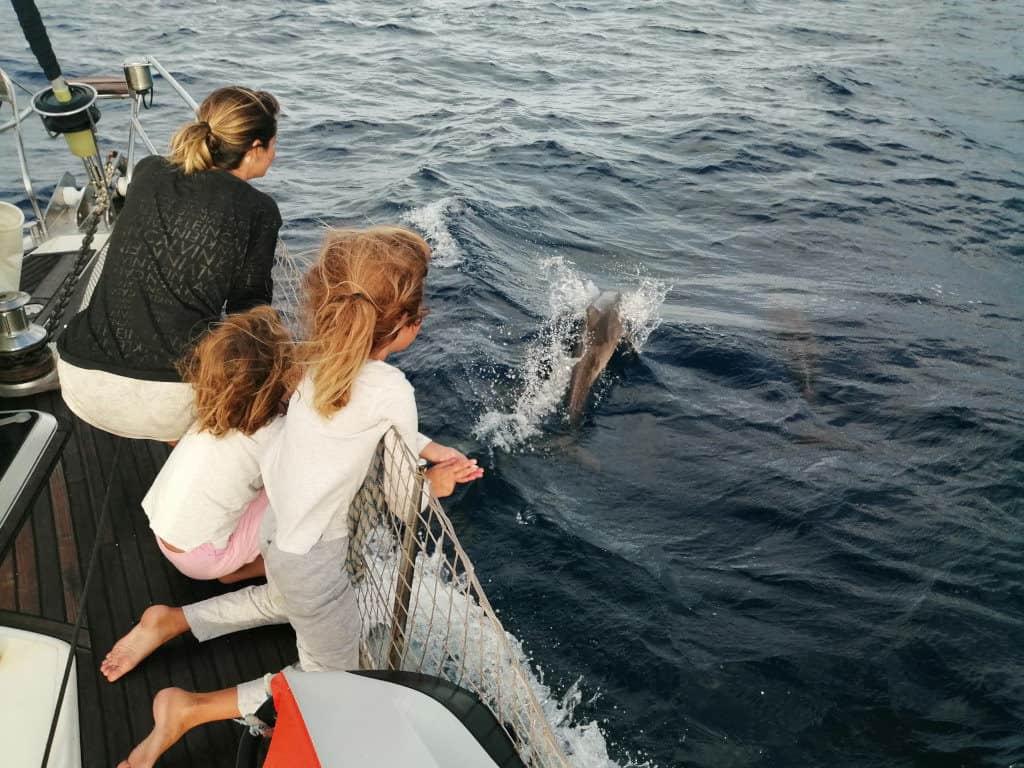 Delfines jugando en la proa del Saramia.
