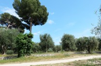Parc Estienne D'orves oliviers olivaie