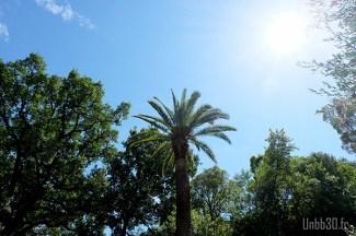 Parc Estienne D'orves palmier