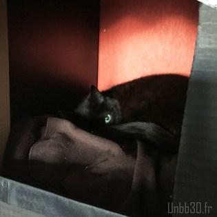 DIY cabane pour chat dans bibliothèque