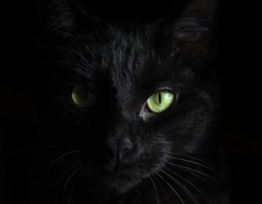chat noir deuil animal