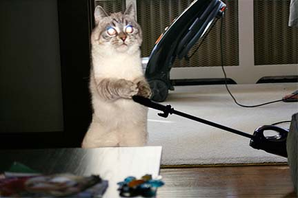kittyhousework copy