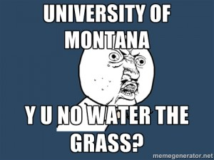 y u no meme grass