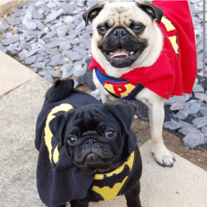 Loki and Pugsley