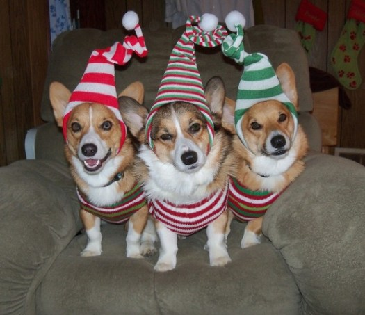corgi-elves