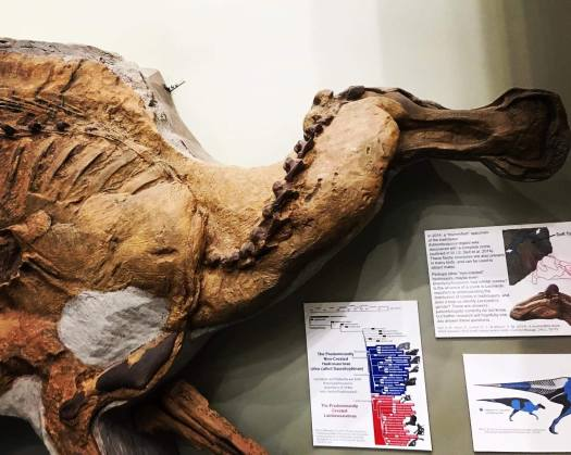 Leonardo the Dinosaur Mummy