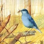 Art Birds Puzzle
