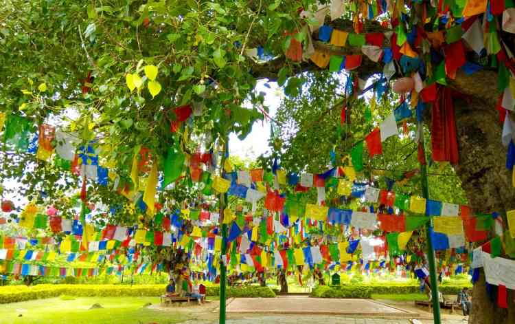 Lumbini Maya Devi Temple Colourful Flags Meditate Peepal Tree Buddha Nirvana