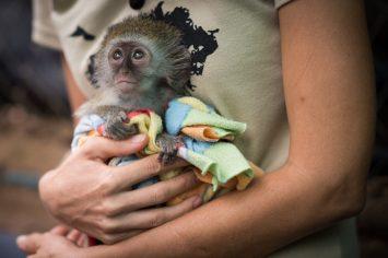 Josie and a baby vervet