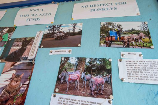 Posters at the KSPCA