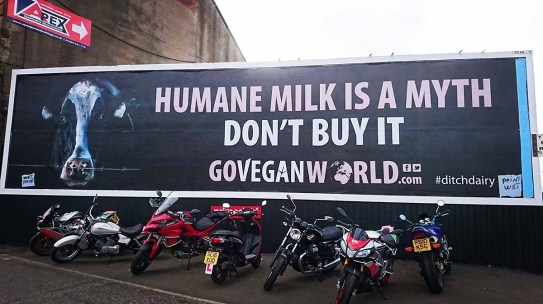 Photo courtesy of Go Vegan World.